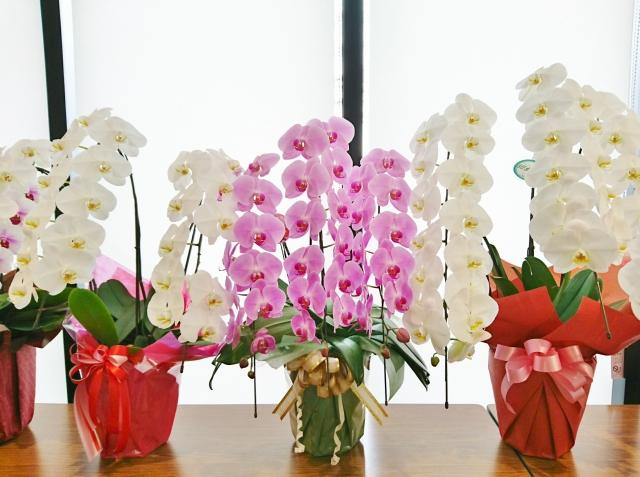 開店祝いのギフトに花を贈ろう!定番の花やお祝いのマナー
