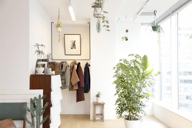 幸福を願う新築祝いを友達に!おすすめの観葉植物をご紹介