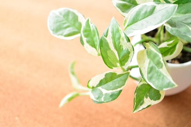 開店祝いのギフトに縁起物の観葉植物を!おすすめの種類は?